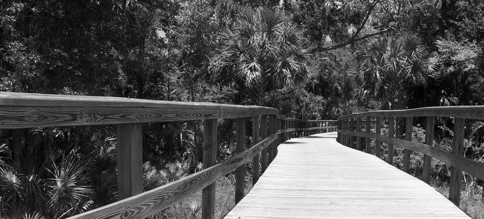Business und Chance in Floridas Städten – Tampa